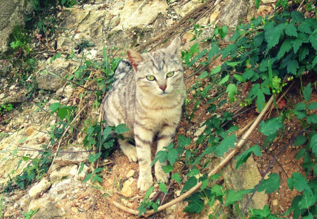 A Greek cat in nature