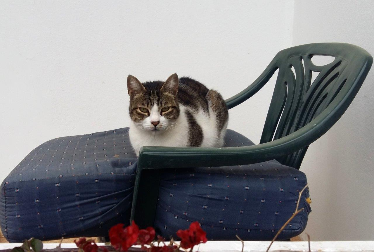 A Greek cat sitting on a chair in Athens