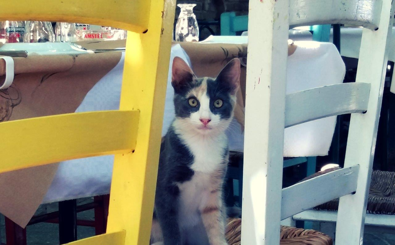 One of the coolest cats in Greece!