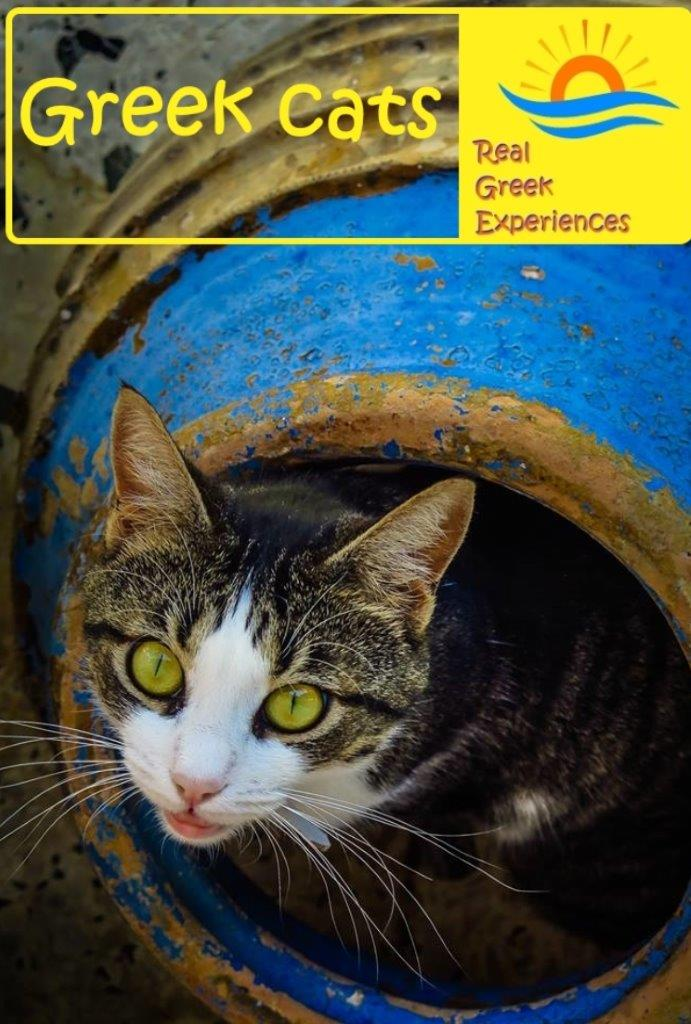 Cats in Greece facts: Everyone that visits Greece ends up with a cat photo sooner or later! Greek cats are everywhere. Find out why in this insight into cats in Greece, facts, photos and more!