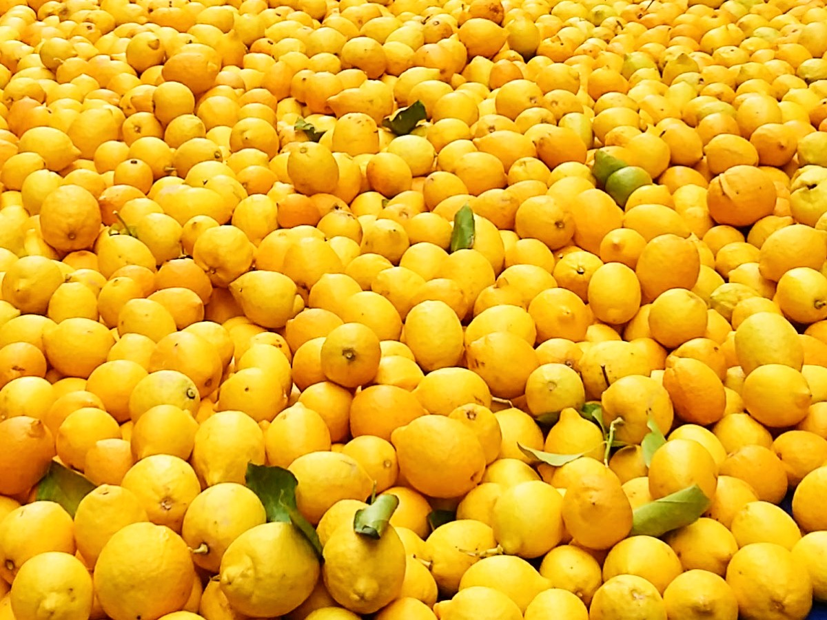Greek lemons make delicious lemonade