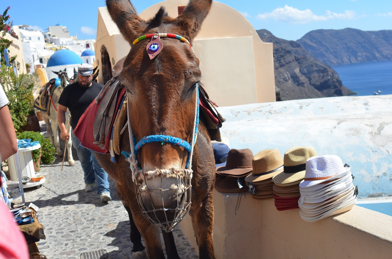 How many days in Santorini - A donkey