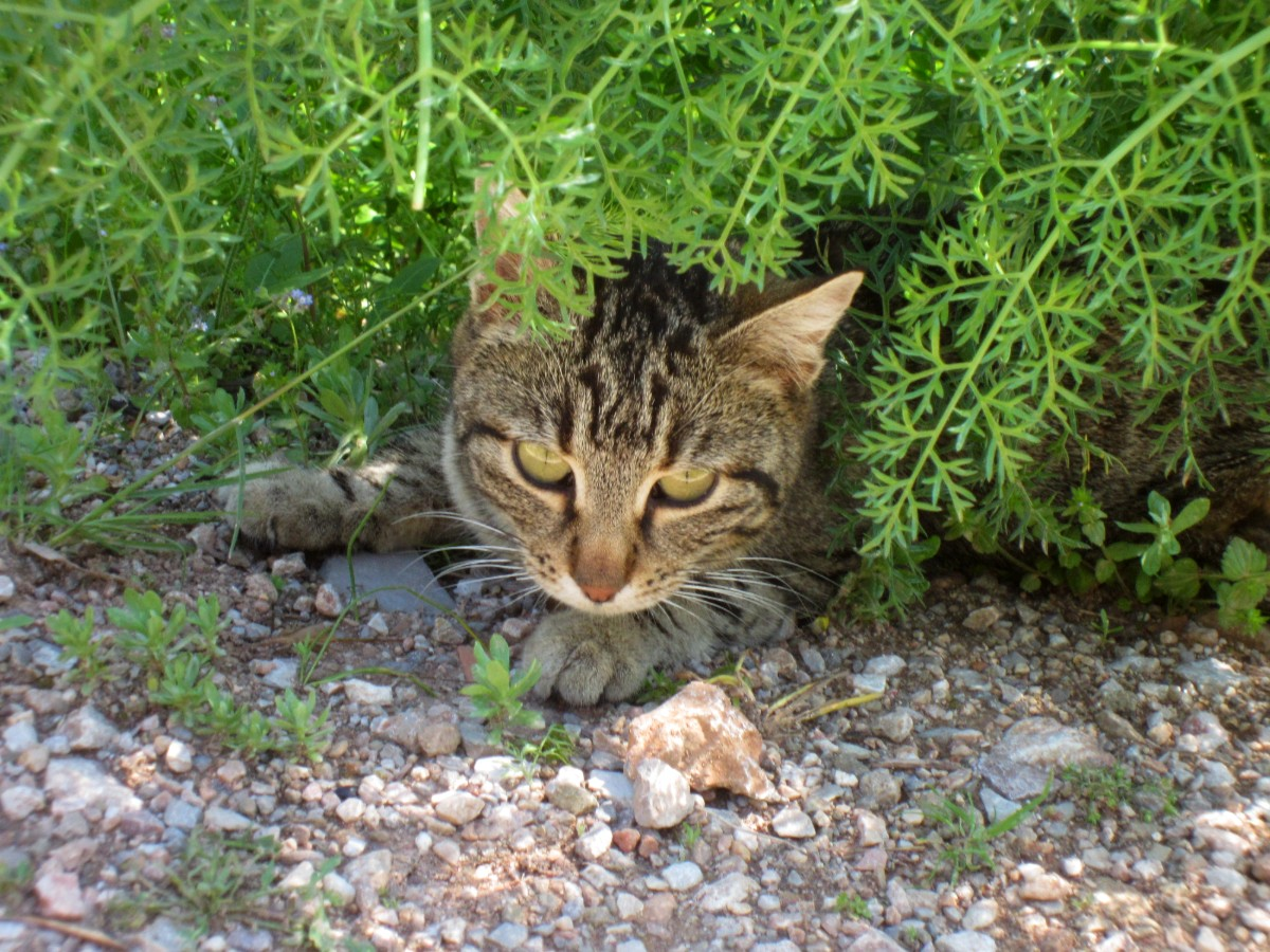 A cat in the archaeological site of Delphi