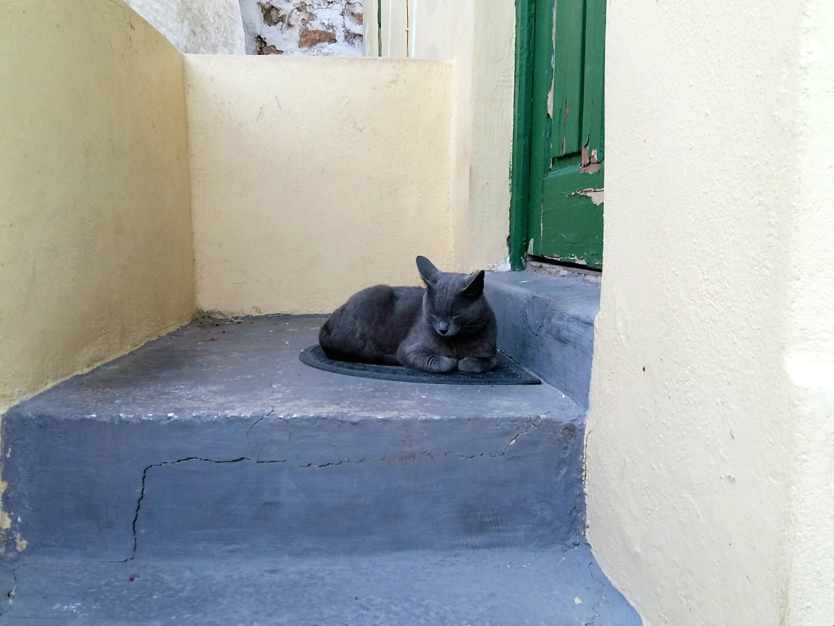 A Greek cat enjoying the sun in Anafiotika