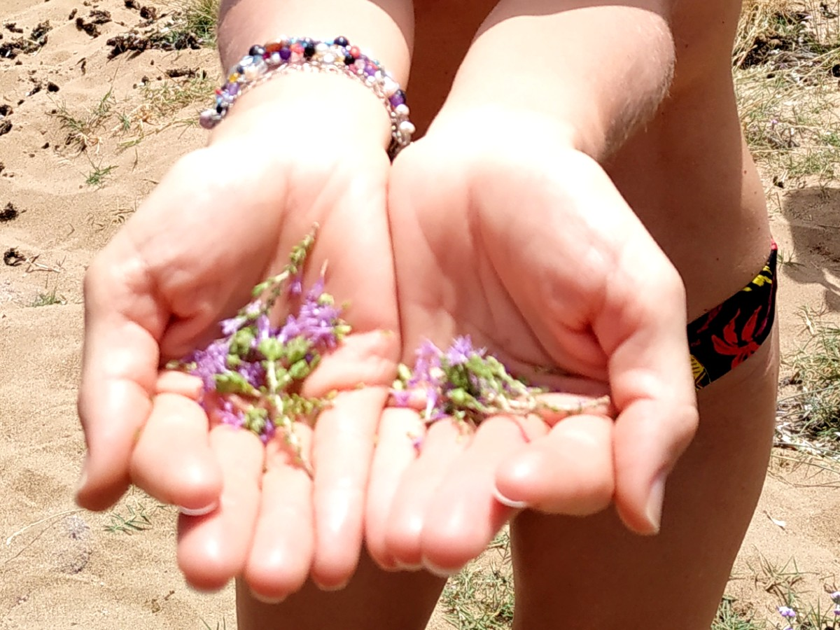 A handful of local herbs in Mykonos Greece