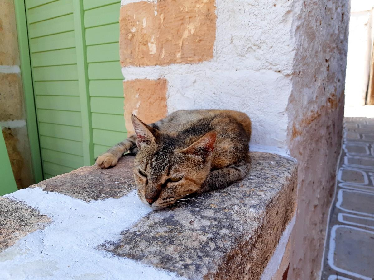 Kimolos has plenty of cats