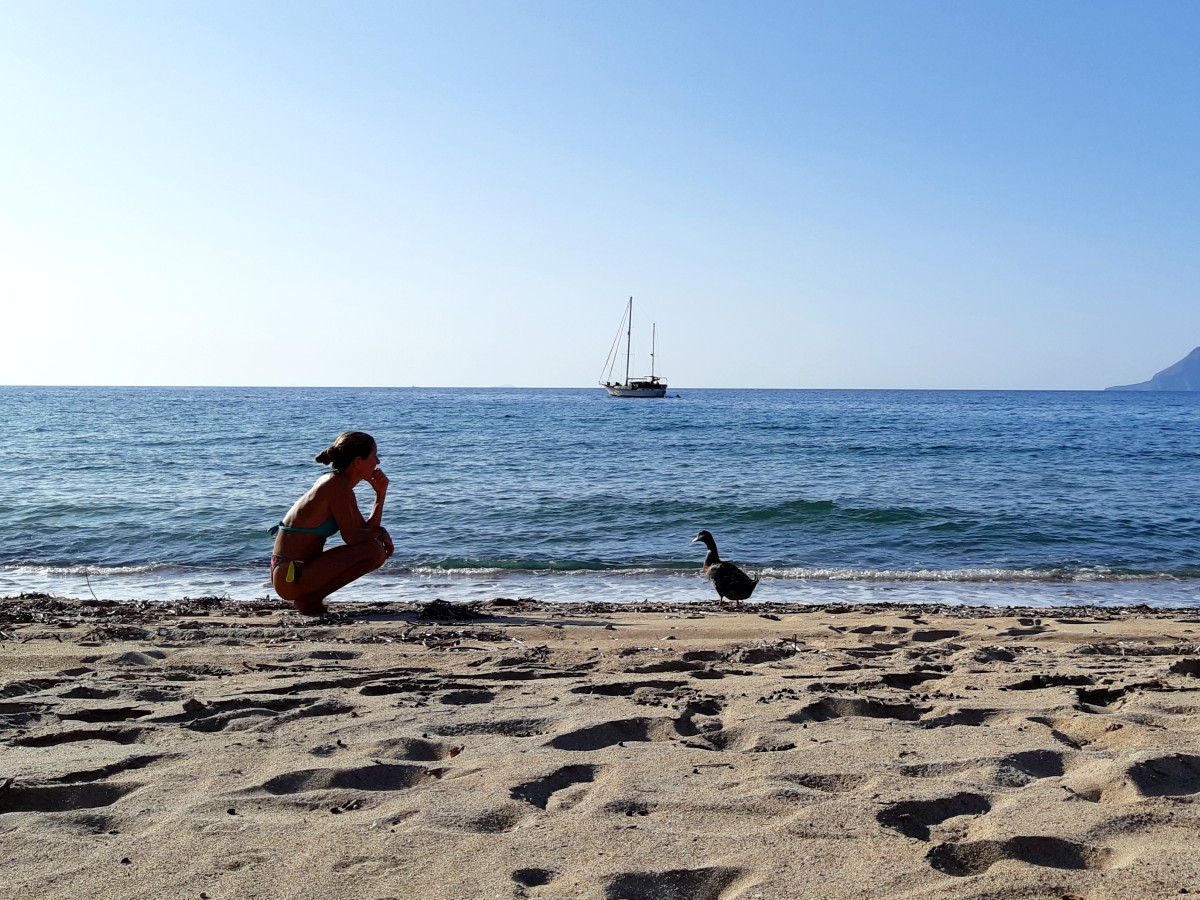 A duck on Agios Ioannis beach Milos