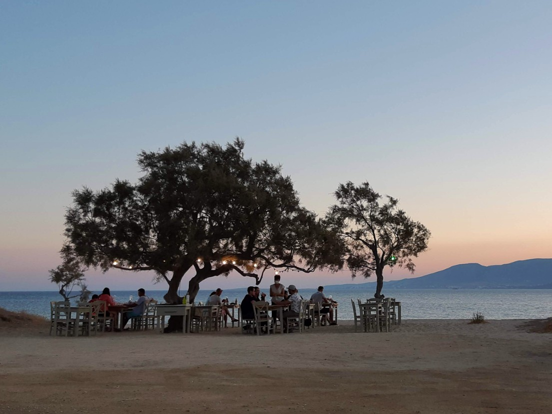 A tree on the beach in Naxos Greece
