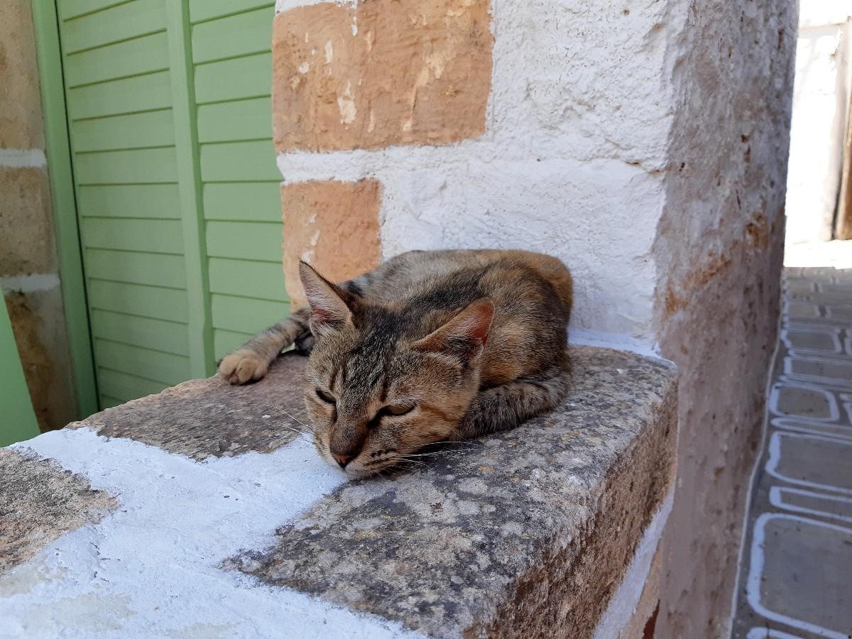 A cat in Kimolos Greece